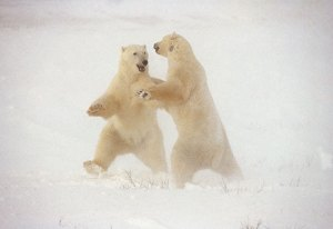 Polar Dance de Thomas D Mangelsen